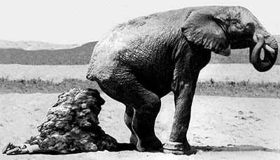 Drôle éléphant  image dillustration — Image vectorielle Ragnarocks ©